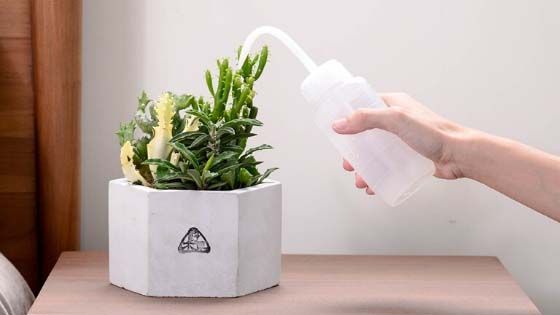 how to water succulents in pots without drainage