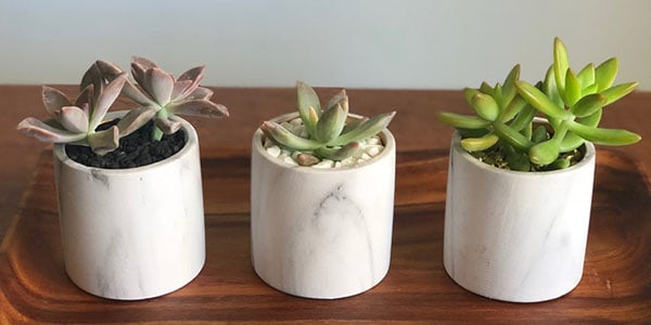 what are succulents used for