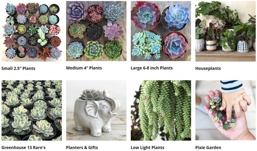 succulents for sale