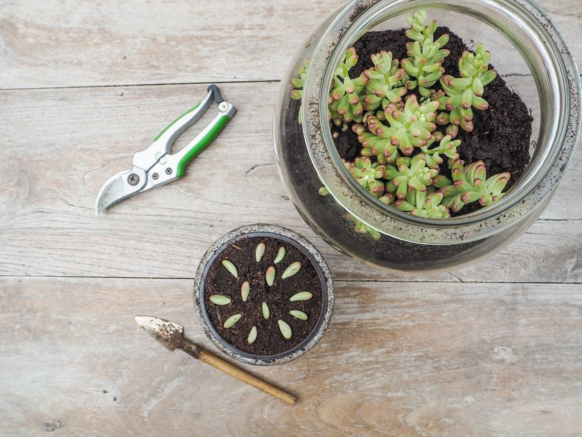 succulents that are easy to propagate