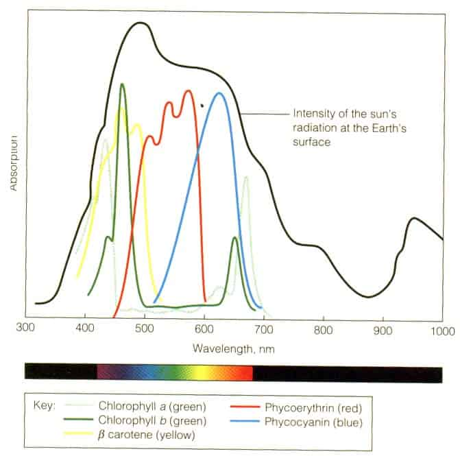 what does a full spectrum LED light mean