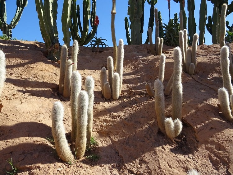 cactus that survive winter