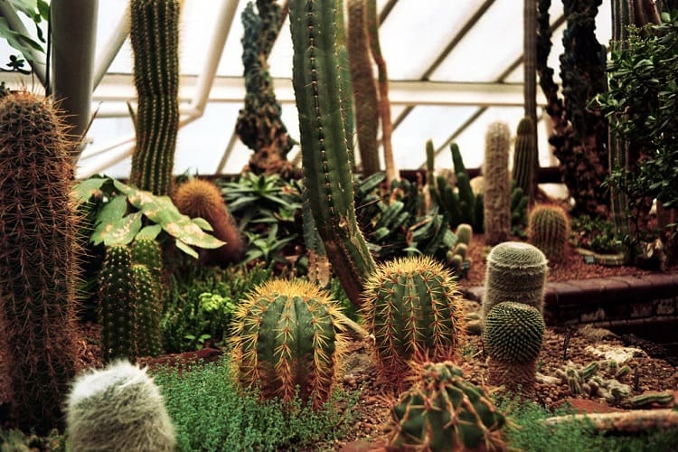 cool facts about cactus