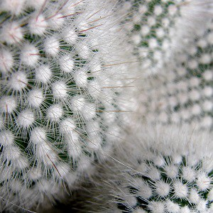 how do you get cactus needles out of your skin
