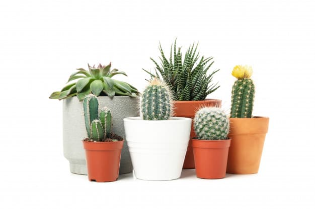 which is better clay pots or plastic pots