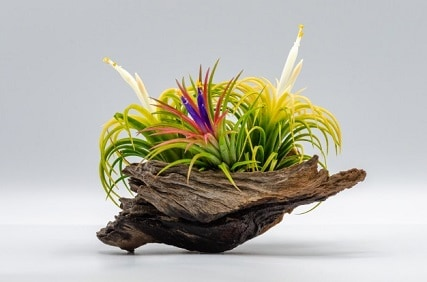 Best Way to Take Care of Air Plants