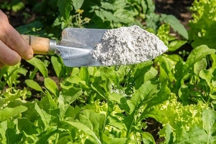 How to Apply Diatomaceous Earth to Plants