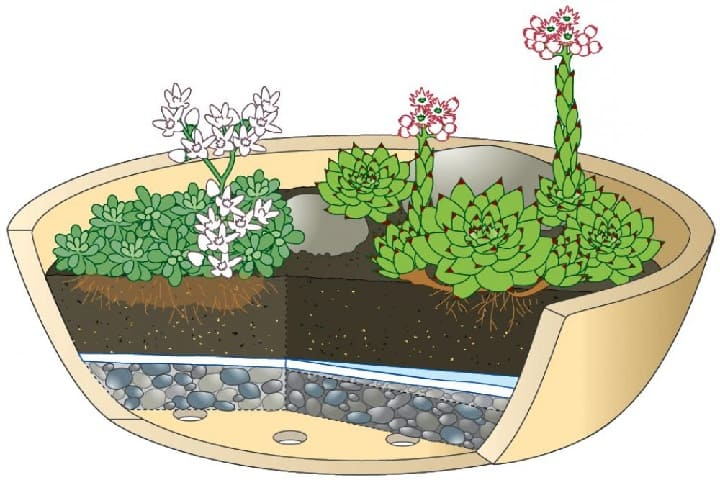 how to plant hens and chicks in a pot