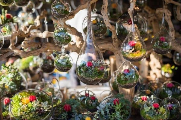 how to take care of a terrarium